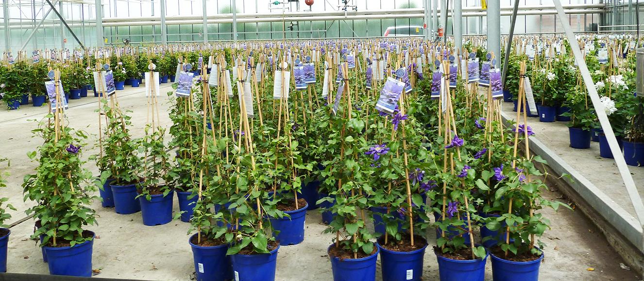 Verarbeitungssystem Pflanzen